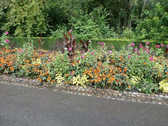 Botanischer Garten Brüglingen / Grün 80: Flowers