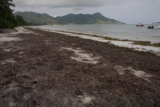 Villas de Mer: Tonnenweise Seegrass am Strand