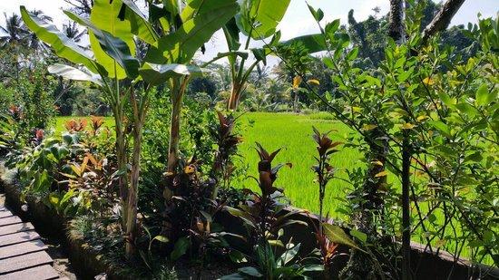Anini Raka Resort & Spa: Vue de la chambre deluxe