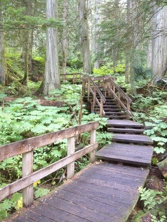 Giant Cedars Boardwalk Trail: Great place to stretch your legs
