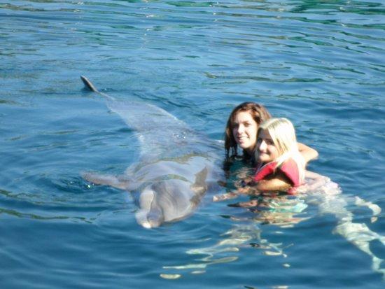 DolphinPark Marmaris: stroking dolphin