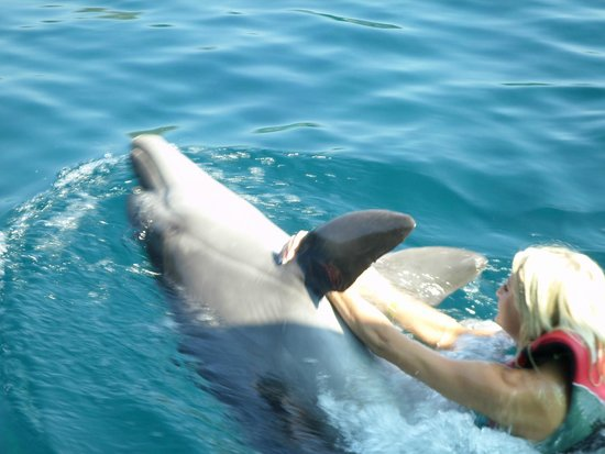 DolphinPark Marmaris: swimming with dolphin