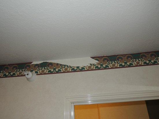 Gray Wolf Inn and Suites: Wall Paper in Bedroom
