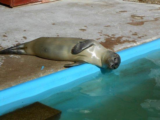 Natureland Seal Sanctuary: Seal