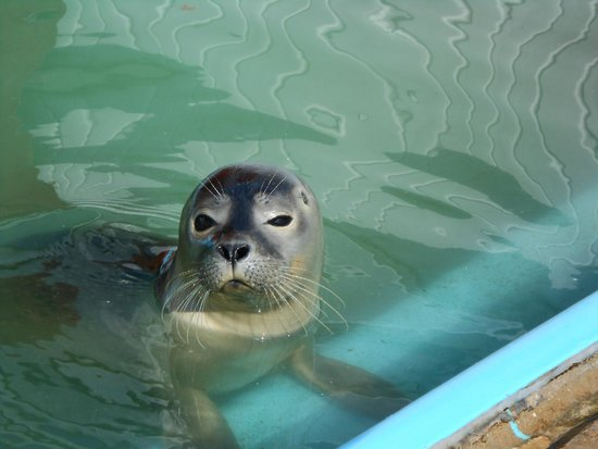 Seal Pup - Picture of Natureland Seal Sanctuary, Skegness ...