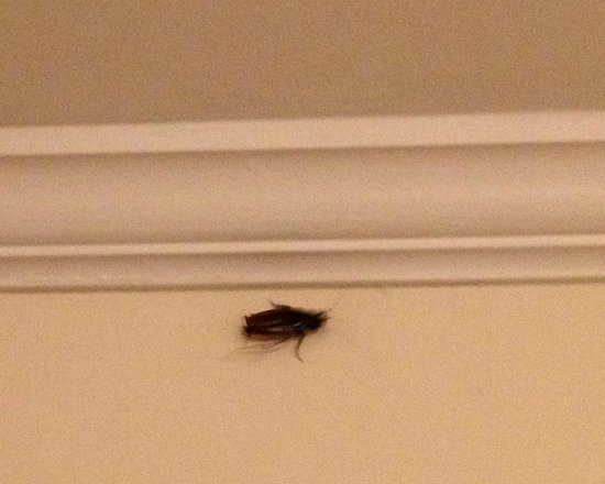 Beaufort, Carolina del Norte: Roach near doorway inside Duke room