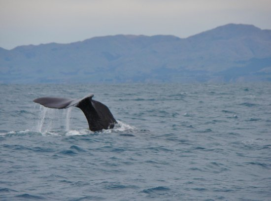 Whale Watch : Another encounter.
