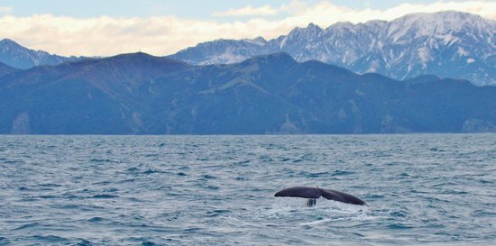 Whale Watch : One of the 4 encounters