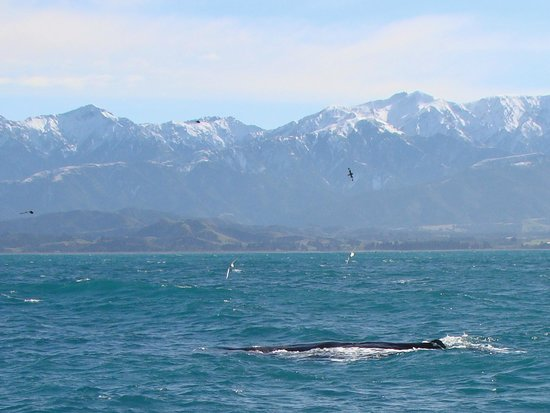Whale Watch : The scenery adds to the experience