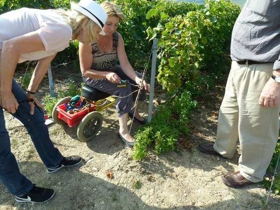 Champagne Domi Moreau: Learning to tie the vines