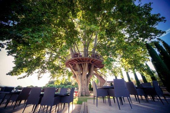 tree dining picture of le domaine des andeols saint. Black Bedroom Furniture Sets. Home Design Ideas