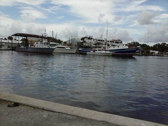 Old town picture of tarpon springs sponge docks tarpon for Tarpon springs fishing
