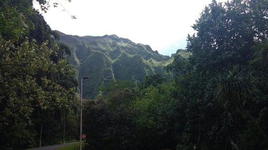 Hoomaluhia Botanical Gardens : Beauty 1