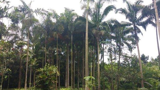 Hoomaluhia Botanical Gardens : Palm Wonder