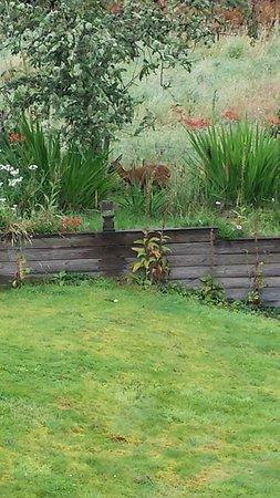 Foxglove Cottages: Taken from sitting room window