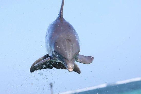 Dolphin Island : Espectacular presentacion !!