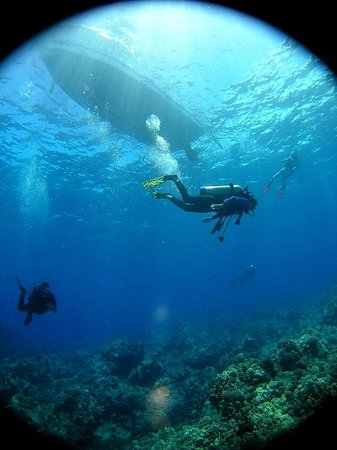 Sandwich Isle Divers