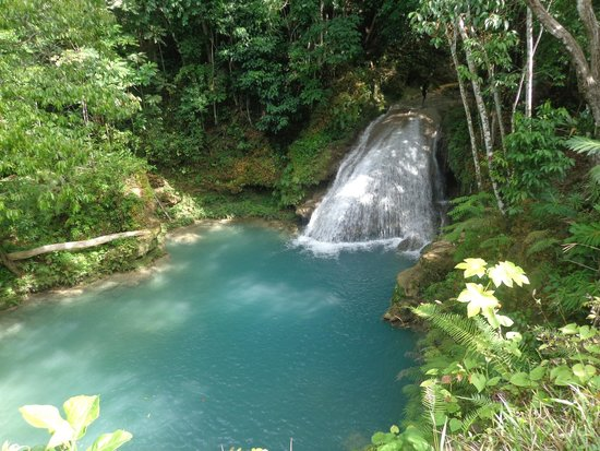 Tour With Ricardo At Liberty Tours Picture Of Liberty Tours - Liberty tours jamaica
