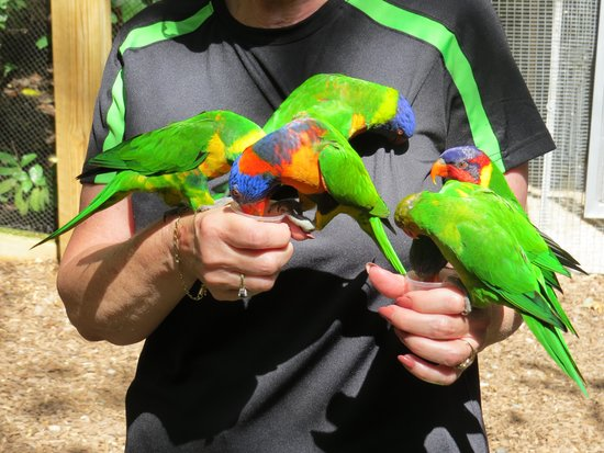 Parrot Mountain & Gardens: Parrots drining the nectar from cups I hold