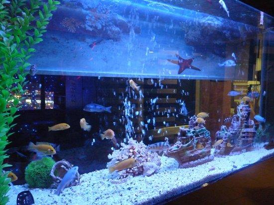 Hotel Otel Lider: Aquarium.