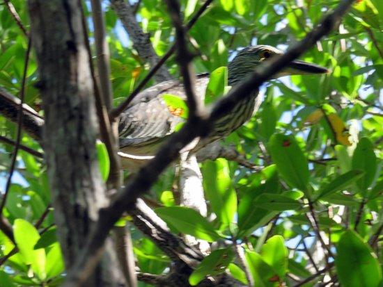 Kayak Excursions: Rare bird
