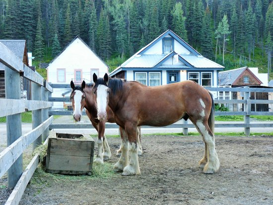Kelly & King House Bed & Breakfasts : Clydesdales with the B&B in background