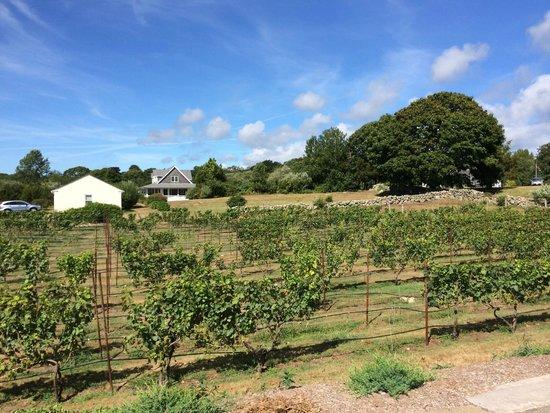 Langworthy Farm Bed and Breakfast: Vineyard