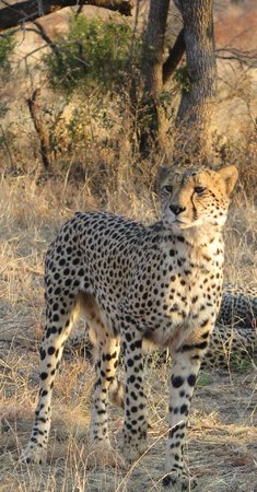 Jamala Madikwe: Breathtakingly beautiful cheetahs