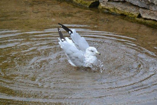 Owen Sound, Canadá: Bird bath