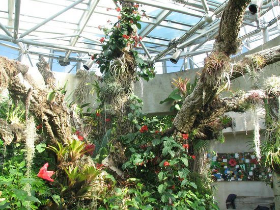 Cactus Picture Of San Antonio Botanical Garden San Antonio Tripadvisor