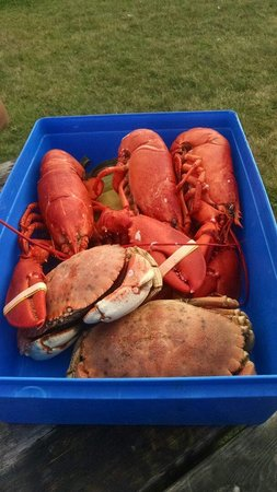 Travelin Lobster : All this for $50!