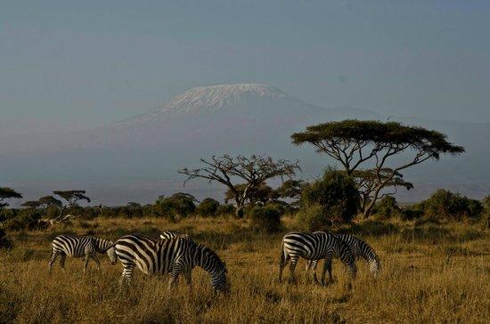 In2kenya: Amboseli