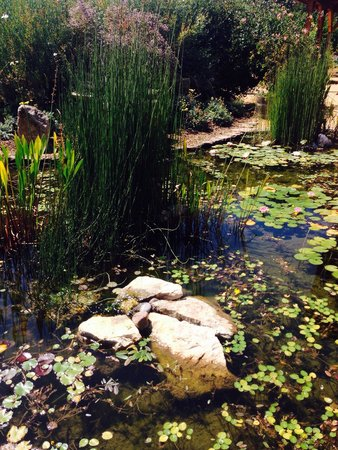 Quivira Vineyards: Lilly pond in center of garden
