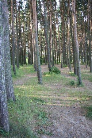 Pirita: Funny forest