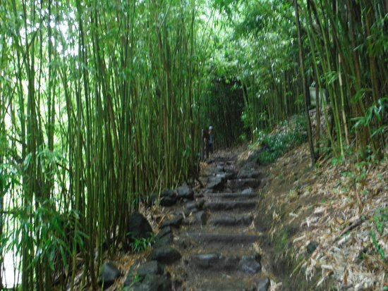 Pipiwai Trail: trail