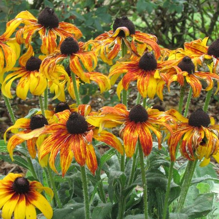 Hatcher Garden & Woodland Preserve: How beautiful are these?