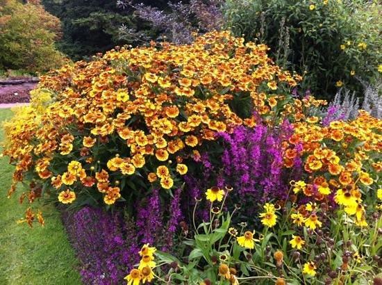Botanical Garden : nice colors