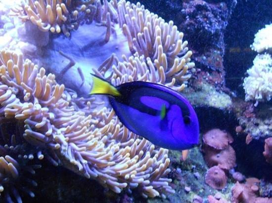 fish foto de aquarium du cap d agde cap d agde tripadvisor