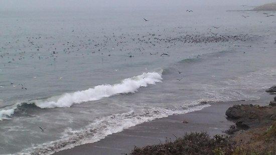 Moonstone Landing: la spiaggia e gli uccelli