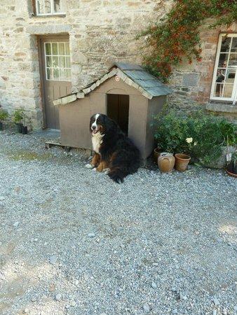 Huntington Castle : Bernese Mountain dog