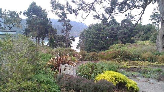 Alegria Oceanfront Inn and Cottages: il bosco e il sentiero per la spiaggia