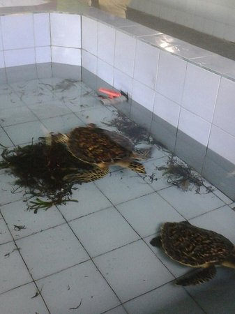 Turtle Conservation and Education Centre: twins turtles