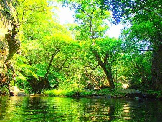 パナリ島&幻の島 ボートシュノーケリング 西表島 KEN GUIDE - Picture of Iriomote Island, Taketomicho ...