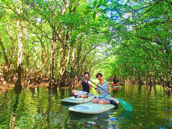マングローブ カヌー&SUP(サップ)クルーズ 西表島 KEN GUIDE - Picture of Iriomote Island, Taketomic...