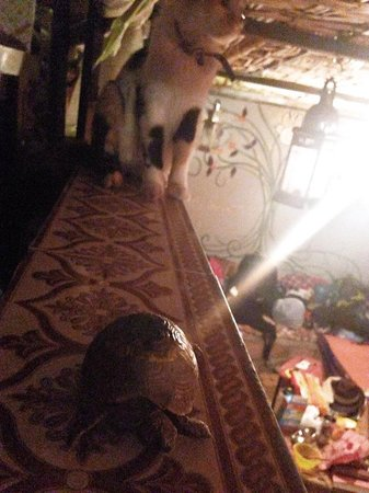 Hostel Riad Marrakech Rouge: Snookie the pet cat and the baby turtle