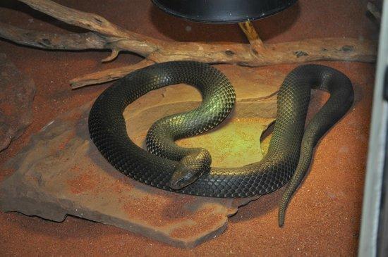 Armadale Reptile Centre