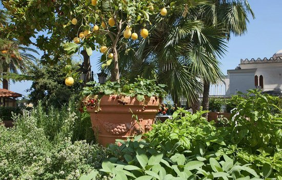 Luxury Villa Excelsior Parco: Garden view