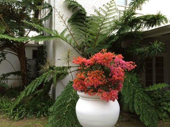 The George Hotel, Eshowe: George Hotel Gardens