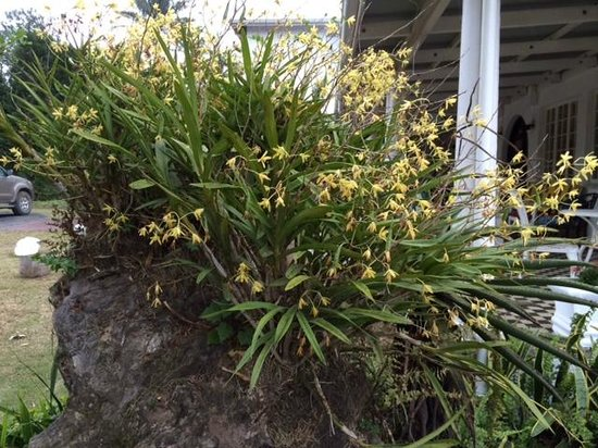 The George Hotel, Eshowe: Orchids