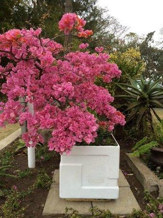 The George Hotel, Eshowe: Pink